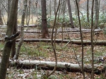 1103きのこの森2.jpg