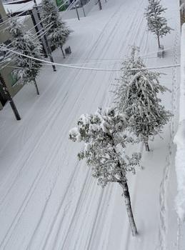1106大雪.jpg